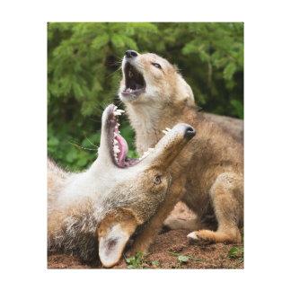 USA, Minnesota, Sandstone, Minnesota Wildlife 5 Stretched Canvas Prints