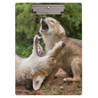 USA, Minnesota, Sandstone, Minnesota Wildlife 6 Clipboard