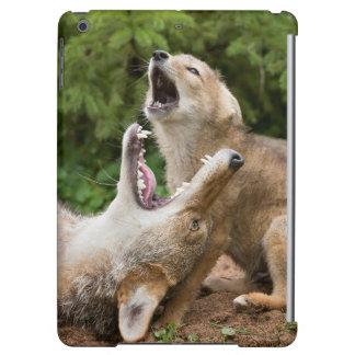 USA, Minnesota, Sandstone, Minnesota Wildlife 6 Cover For iPad Air