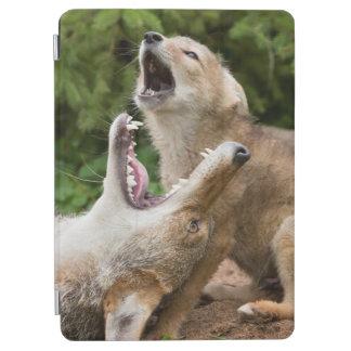USA, Minnesota, Sandstone, Minnesota Wildlife 6 iPad Air Cover
