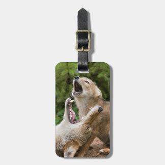 USA, Minnesota, Sandstone, Minnesota Wildlife 6 Luggage Tag