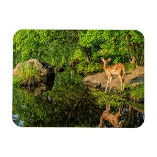 USA, Minnesota, Sandstone, Minnesota Wildlife 6 Magnet