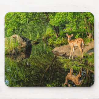 USA, Minnesota, Sandstone, Minnesota Wildlife 6 Mouse Mat