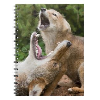 USA, Minnesota, Sandstone, Minnesota Wildlife 6 Note Books
