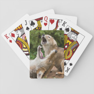 USA, Minnesota, Sandstone, Minnesota Wildlife 6 Playing Cards