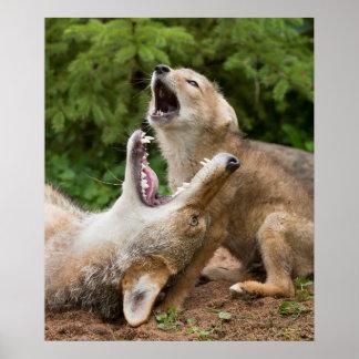 USA, Minnesota, Sandstone, Minnesota Wildlife 6 Poster