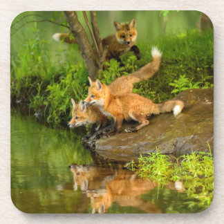 USA, Minnesota, Sandstone, Minnesota Wildlife 7 Beverage Coaster