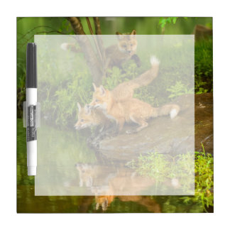 USA, Minnesota, Sandstone, Minnesota Wildlife 7 Dry Erase Board
