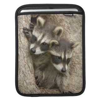 USA, Minnesota, Sandstone, Minnesota Wildlife 7 iPad Sleeve