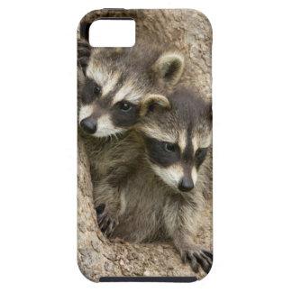 USA, Minnesota, Sandstone, Minnesota Wildlife 7 iPhone 5 Cover