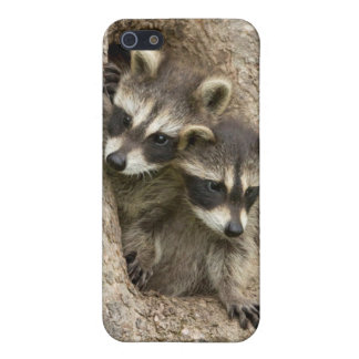 USA, Minnesota, Sandstone, Minnesota Wildlife 7 iPhone 5 Cover