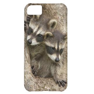 USA, Minnesota, Sandstone, Minnesota Wildlife 7 iPhone 5C Case