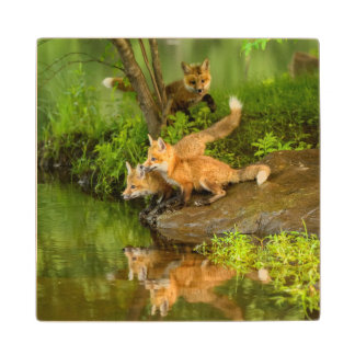 USA, Minnesota, Sandstone, Minnesota Wildlife 7 Maple Wood Coaster
