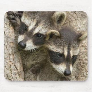 USA, Minnesota, Sandstone, Minnesota Wildlife 7 Mouse Mat