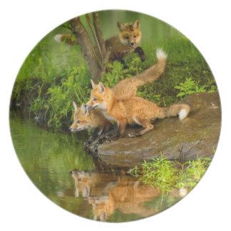 USA, Minnesota, Sandstone, Minnesota Wildlife 7 Plate