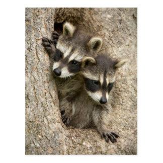 USA, Minnesota, Sandstone, Minnesota Wildlife 7 Post Cards