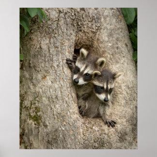USA, Minnesota, Sandstone, Minnesota Wildlife 7 Poster