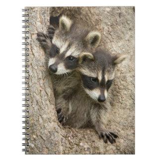 USA, Minnesota, Sandstone, Minnesota Wildlife 7 Spiral Notebooks