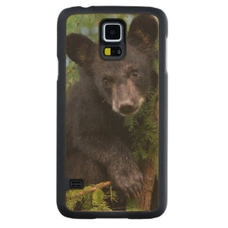 USA, Minnesota, Sandstone, Minnesota Wildlife 8 Carved Maple Galaxy S5 Case