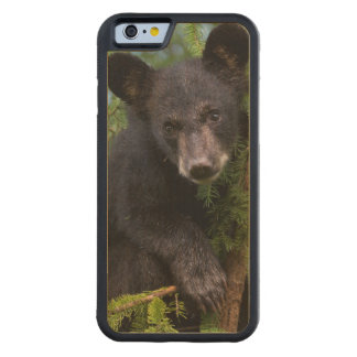 USA, Minnesota, Sandstone, Minnesota Wildlife 8 Carved Maple iPhone 6 Bumper Case