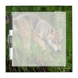 USA, Minnesota, Sandstone, Minnesota Wildlife 8 Dry Erase Board