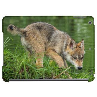 USA, Minnesota, Sandstone, Minnesota Wildlife 8 iPad Air Case