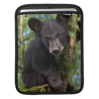 USA, Minnesota, Sandstone, Minnesota Wildlife 8 iPad Sleeve