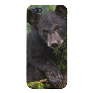 USA, Minnesota, Sandstone, Minnesota Wildlife 8 iPhone 5 Case