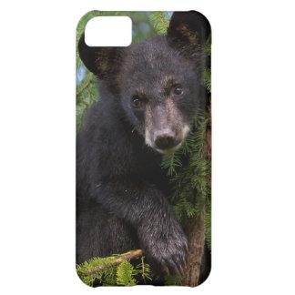 USA, Minnesota, Sandstone, Minnesota Wildlife 8 iPhone 5C Case
