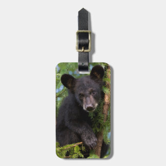 USA, Minnesota, Sandstone, Minnesota Wildlife 8 Luggage Tag