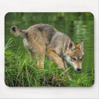 USA, Minnesota, Sandstone, Minnesota Wildlife 8 Mouse Mat