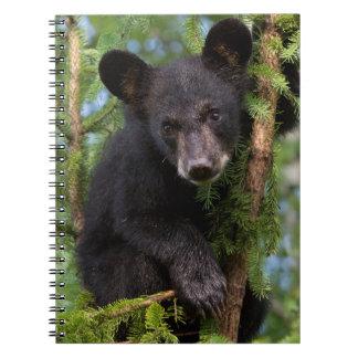 USA, Minnesota, Sandstone, Minnesota Wildlife 8 Notebook