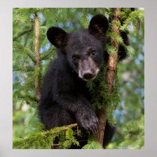 USA, Minnesota, Sandstone, Minnesota Wildlife 8 Poster