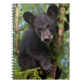 USA, Minnesota, Sandstone, Minnesota Wildlife 8 Spiral Notebook