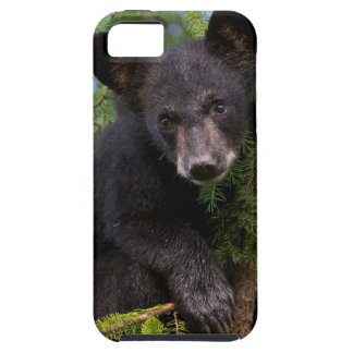 USA, Minnesota, Sandstone, Minnesota Wildlife 8 Tough iPhone 5 Case