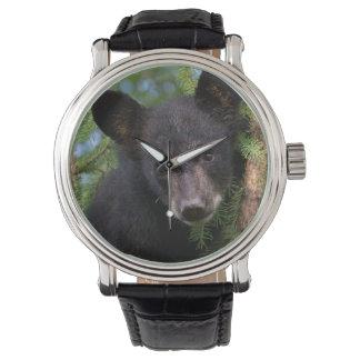USA, Minnesota, Sandstone, Minnesota Wildlife 8 Watch