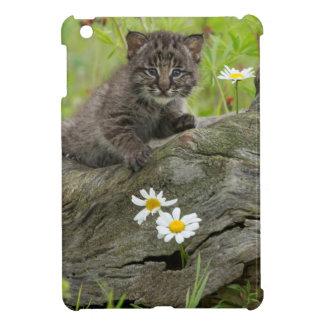 USA, Minnesota, Sandstone, Minnesota Wildlife 9 Cover For The iPad Mini