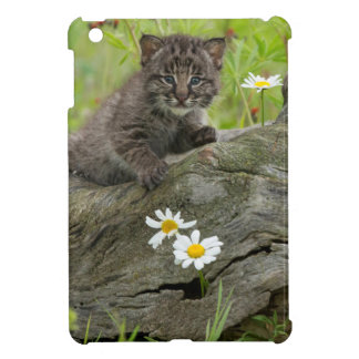 USA, Minnesota, Sandstone, Minnesota Wildlife 9 iPad Mini Covers
