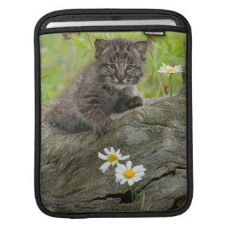 USA, Minnesota, Sandstone, Minnesota Wildlife 9 iPad Sleeve