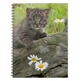 USA, Minnesota, Sandstone, Minnesota Wildlife 9 Spiral Notebooks