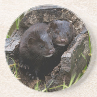 USA, Minnesota, Sandstone, Minnesota Wildlife Coaster
