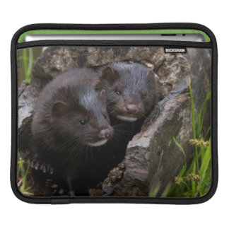 USA, Minnesota, Sandstone, Minnesota Wildlife iPad Sleeve