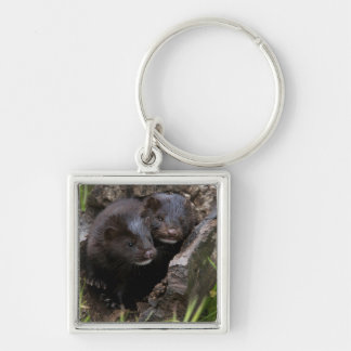 USA, Minnesota, Sandstone, Minnesota Wildlife Key Ring