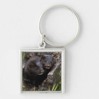 USA, Minnesota, Sandstone, Minnesota Wildlife Key Ring