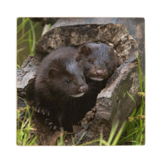 USA, Minnesota, Sandstone, Minnesota Wildlife Wood Coaster