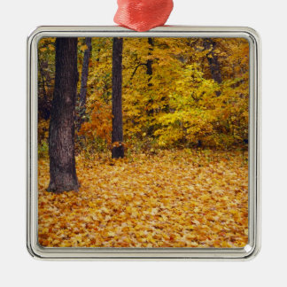 USA, Missouri, Boone County, Maple Forest in Christmas Ornament