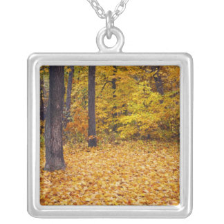 USA, Missouri, Boone County, Maple Forest in Silver Plated Necklace