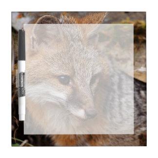 USA, Montana, Kalispell. Gray fox at Triple D Dry Erase Board