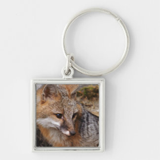 USA, Montana, Kalispell. Gray fox at Triple D Key Ring