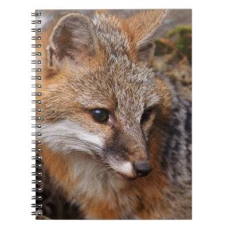 USA, Montana, Kalispell. Gray fox at Triple D Spiral Note Books